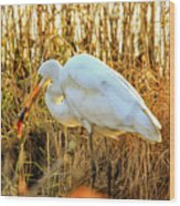 Egret Fishing In Sunset At Forsythe National Wildlife Refuge Wood Print