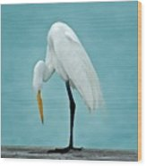 Egret Foot Inspection Wood Print