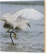 Egret Hunting Wood Print