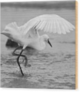 Egret Hunting In Black And White Wood Print