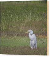 Egret In A Field, No. 1 Wood Print