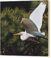 Egret In Flight 1 Wood Print
