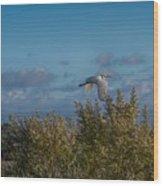 Egret In Flight Wood Print
