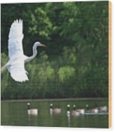 Egret In Flight With Geese Wood Print