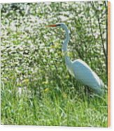 Egret In Flowers Wood Print
