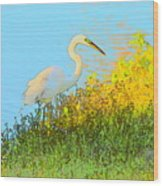 Egret In The Lake Shallows Wood Print