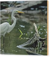 Egret In The Swamp Wood Print