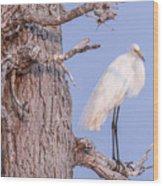 Egret In Tree Wood Print