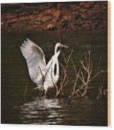 Egret Ix Wood Print by Gary Adkins