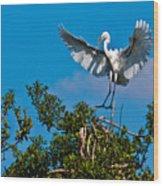 Egret Landing Wood Print
