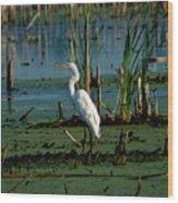 Egret Of The Marsh Wood Print