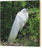 Egret On Guard Wood Print