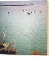 Egret On Marathon Key Wood Print