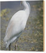 Egret Or Crane Wood Print