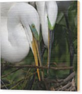 Egret Pair Wood Print