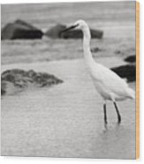 Egret Patrolling In Black And White Wood Print