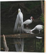 Egret Reflection Wood Print