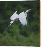 Egret Rising II Wood Print
