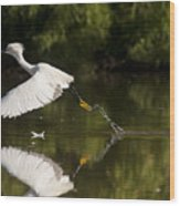 Egret Splash Wood Print