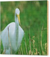 Egret Stare Down Wood Print