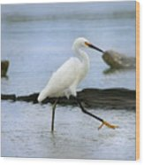 Egret Step Wood Print