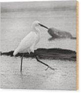 Egret Step In Black And White Wood Print