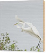 Egret-taking Flight Wood Print