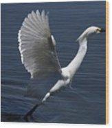 Egret Taking Off Wood Print