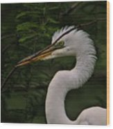 Egret With Branch Wood Print
