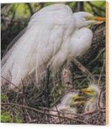 Egrets - 3362 Wood Print