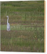Egrets In A Field Wood Print