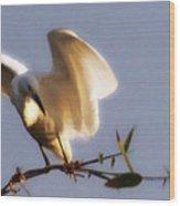 Egrets Landing Wood Print