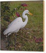 Egret's Meal Wood Print