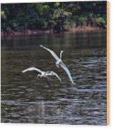Egrets V Wood Print