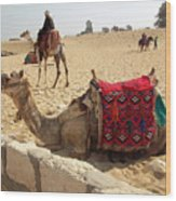 Egypt - Camel Getting Ready For The Ride Wood Print