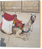 Egypt - Camel Wood Print