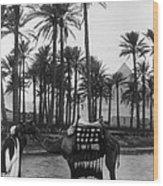 Egypt: Village Wood Print