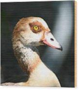 Egyptian Goose 2 Wood Print