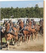 Belgian Eight Horse Hitch  Wood Print