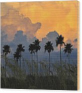 Eight Palms Wood Print by David Lee Thompson