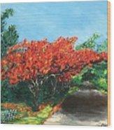 El Flamboyan En Mi Camino Wood Print