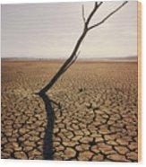 El Mirage Snag Wood Print by Larry Dale Gordon - Printscapes