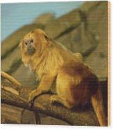 El Paso Zoo - Golden Lion Tamarin Wood Print by Allen Sheffield