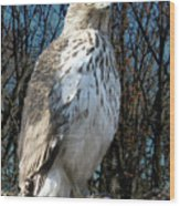 Elder Hawk Wood Print