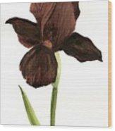 elderly Iris Wood Print