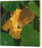 Eldorado For Bees Wood Print