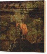 Elefant King Wood Print