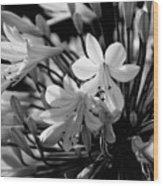 Elegance - Bw Wood Print