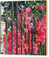Elegant Fence Wood Print
