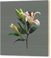 Elegant Lily And Buds Wood Print